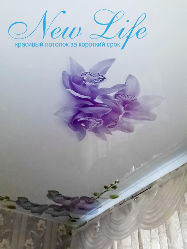 Арт-печать Цветы на лаковом потолке