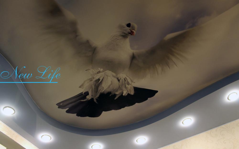 Фотопечать на натяжном потолке голубя, летящего в небе по направлению из угла в середину комнаты рис. 2 из каталога Птицы