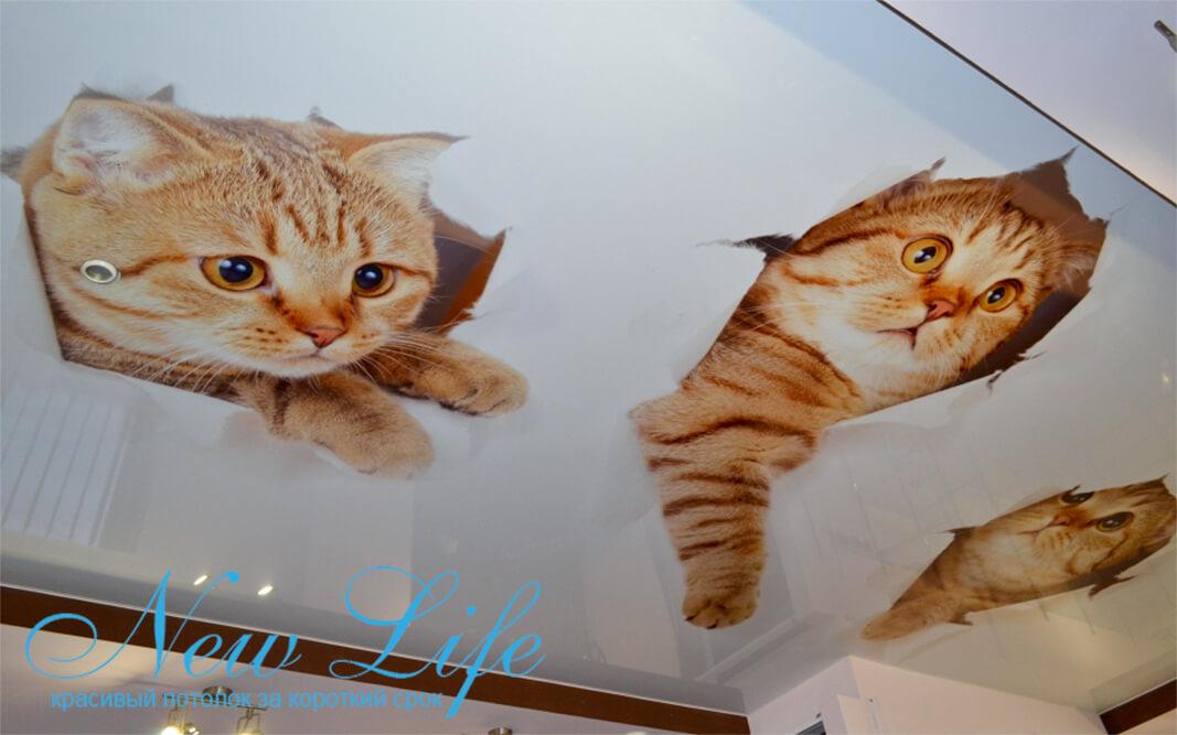 Глянцевый натяжной потолок с арт печатью Коты