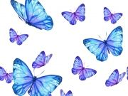 бабочки (61)