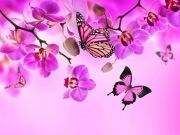 бабочки (62)
