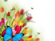 бабочки (63)