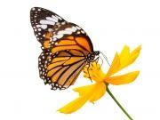 бабочки (64)