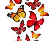 бабочки (67)