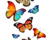бабочки (68)