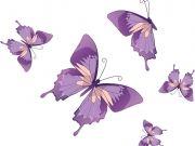 бабочки (81)