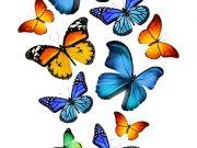 бабочки (86)