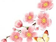 бабочки (87)