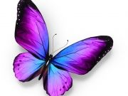 бабочки (74)