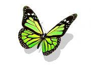 Фотопечать на потолке: Бабочки 17