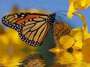 Фотопечать на потолке: Бабочки 18