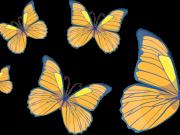 Фотопечать на потолке: Бабочки 19