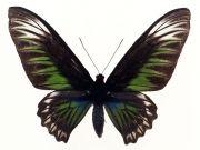 Фотопечать на потолке: Бабочки 20