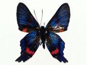 Фотопечать на потолке: Бабочки 25