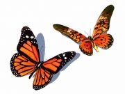 Фотопечать на потолке: Бабочки 27