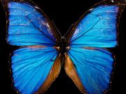 Фотопечать на потолке: Бабочки 3