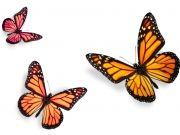 Фотопечать на потолке: Бабочки 30