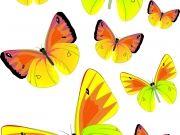 Фотопечать на потолке: Бабочки 34