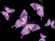 Фотопечать на потолке: Бабочки 38