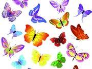 Фотопечать на потолке: Бабочки 39