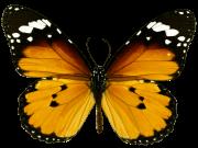 Фотопечать на потолке: Бабочки 40