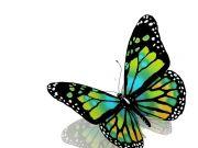 Фотопечать на потолке: Бабочки 44
