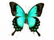 Фотопечать на потолке: Бабочки 45