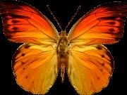 Фотопечать на потолке: Бабочки 47