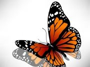 Фотопечать на потолке: Бабочки 50