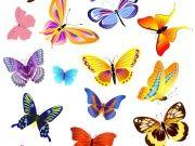 Фотопечать на потолке: Бабочки 51