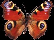 Фотопечать на потолке: Бабочки 52