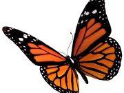Фотопечать на потолке: Бабочки 53