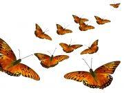 Фотопечать на потолке: Бабочки 56