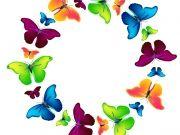 Фотопечать на потолке: Бабочки 57