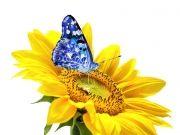 Фотопечать на потолке: Бабочки 58