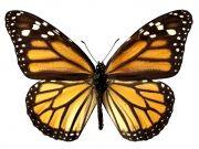 Фотопечать на потолке: Бабочки 7
