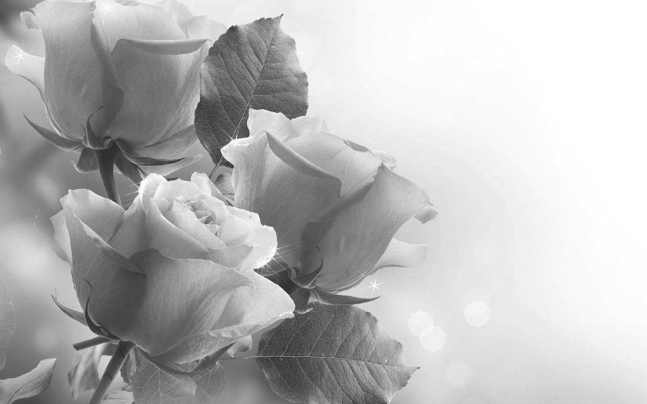 Картинки розы чёрно белые