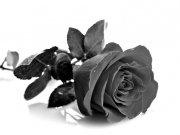 Фотообои на стену: Чёрное и белое 13