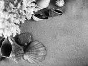 Фотообои на стену: Чёрное и белое 17
