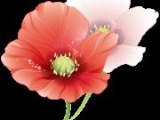 цветы (161)