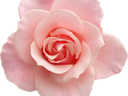 цветы (168)
