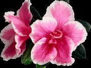 цветы (169)