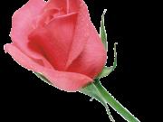 цветы (171)