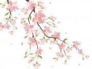 цветы (178)