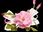 цветы (179)