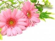 цветы (180)