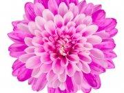 цветы (182)