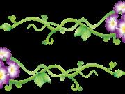 цветы (189)