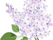 цветы (190)