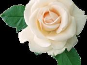 цветы (195)